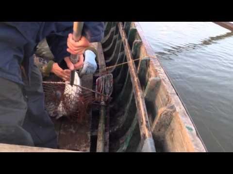 рыбалка на подпуск видео