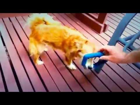 Самые смешные ролики из жизни собак