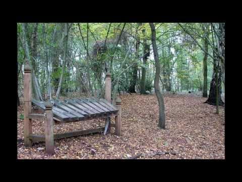 puzzle-wood-england-travle-tour-england.html