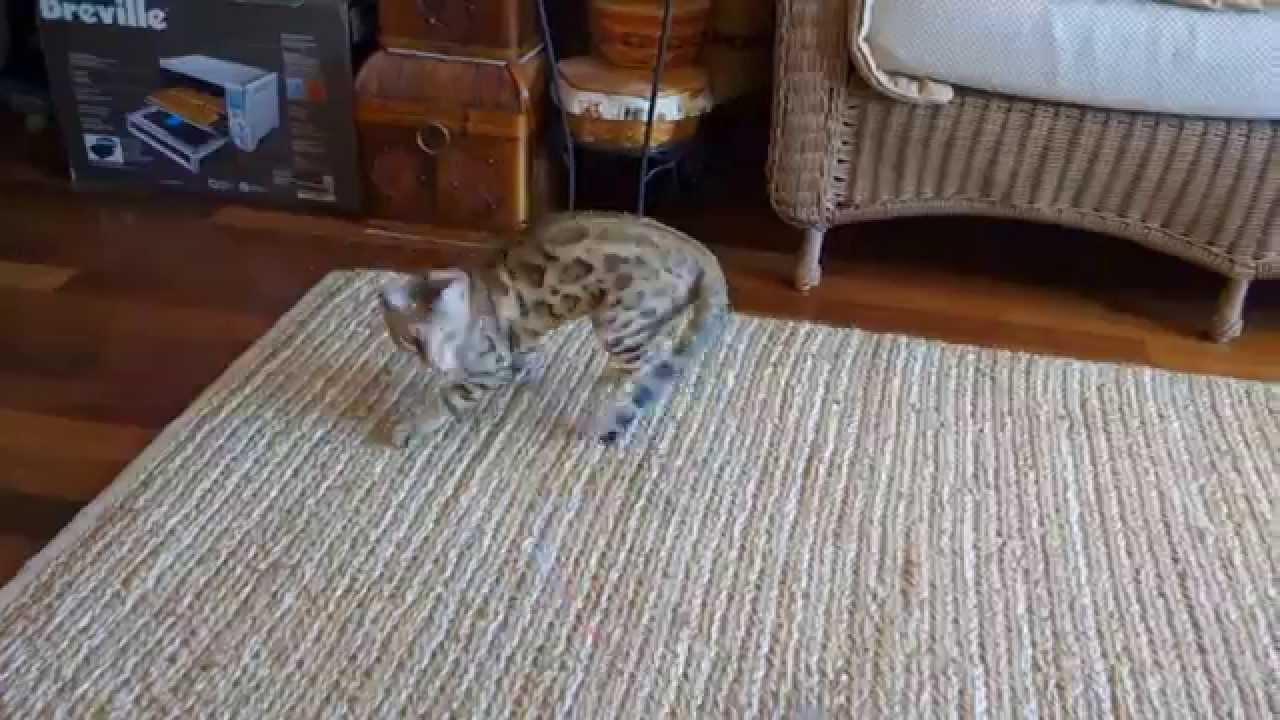 jeffy cat piano