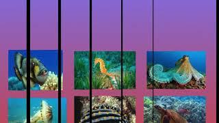 Underwater Plants Inquiry