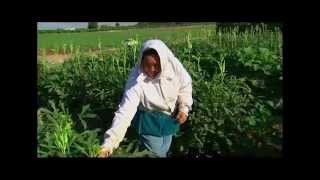 California's Gold with Huell Howser: Hmong Agriculture