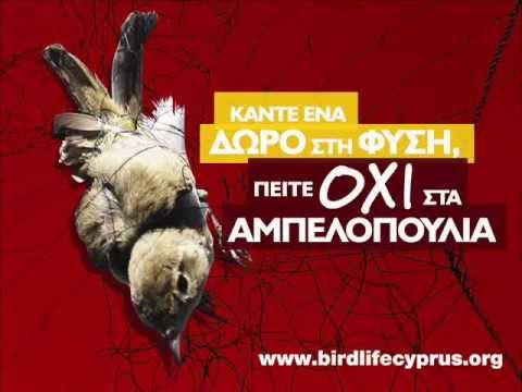 Cyprus bird trapping - BirdLife Cyprus' radio spot on the profitable business of bird trapping