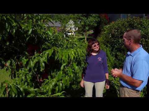 How to Have Healthy and Productive  Fruit Trees in the Home Landscape