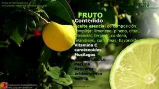 Limón. Propiedades y usos medicinales de la planta de limón