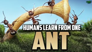 Video: Prophet Solomon and the Army of Ants - Mufti Menk