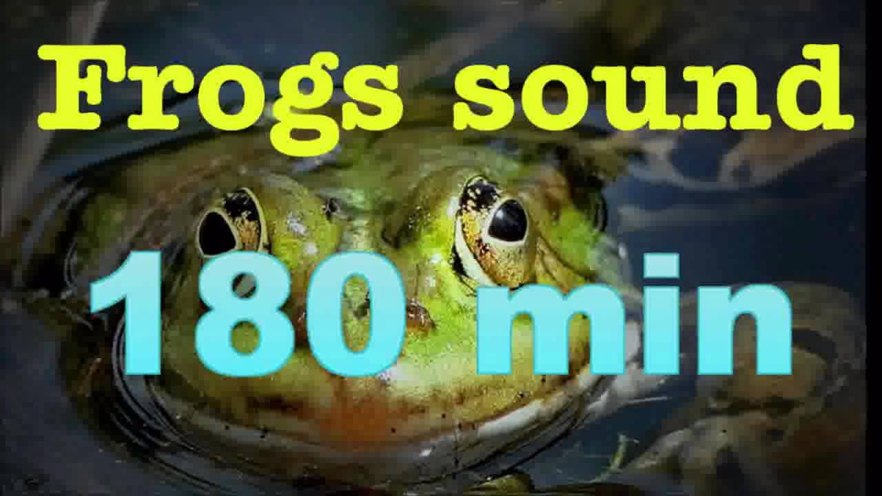 Sound of nature frogs song no music 180 mins youtube