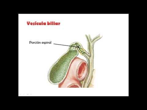Vesicula biliar Anatomia II