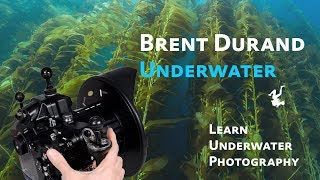 Learn Underwater Photography