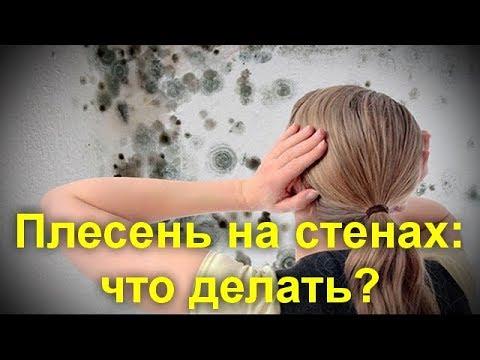 Плесень на стенах: что делать? Что   нужно   сделать   обязательно !