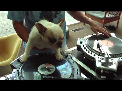 DJ MAMA scratch DUET w Truly OdD Greyboy french bulldog hip hop