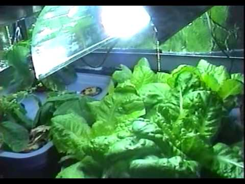 My Cheap Cfl Grow Light Fixture Results In Hydroponics