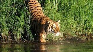 Home (Sundarbans Forest) of Royal Bengal Tiger