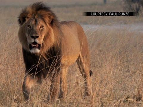 US Officials Seek Alleged Lion Killer