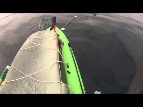 Hammerhead Shark in Solana Beach visits David Applegate's Kayak Sailboat