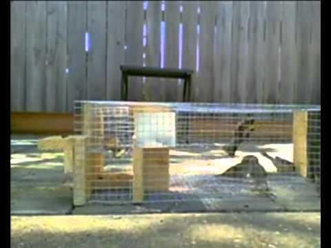 Trampa para pájaros multicaptura