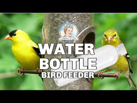 DIY Water Bottle Bird Feeder