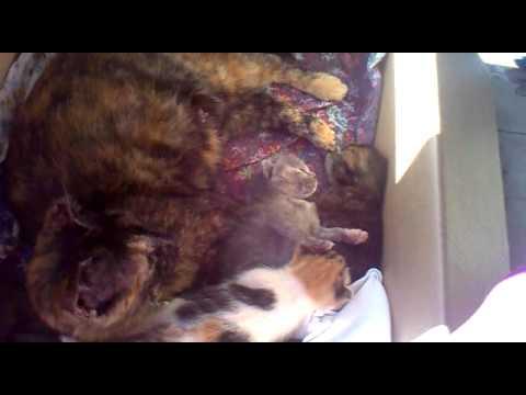 Gattini di 2 settimane