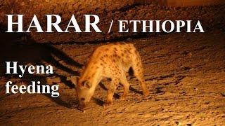 Ethiopia - Harar (Hyena feeding)