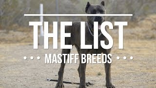 THE LIST: TOP MASTIFF DOG BREEDS