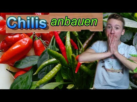 Chilis erfolgreich anbauen/ unser Chilijahr 2017