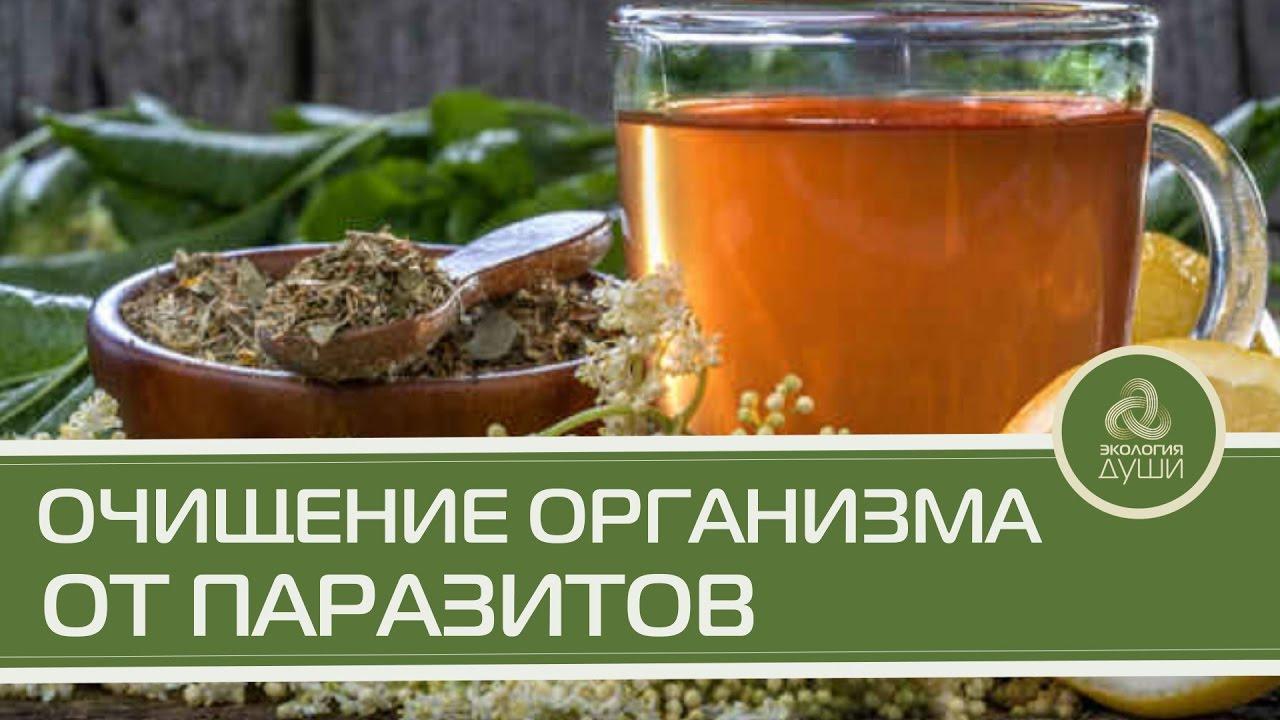 Очищаем организм от паразитов народными средствами в домашних условиях 926