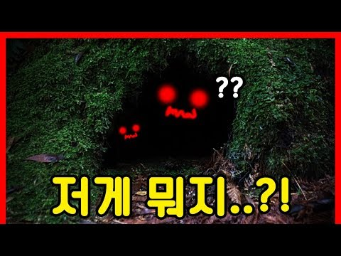 [토스트] 동굴에서 나온 충격적인 동물의 정체 ㄷㄷ..|빨간토마토