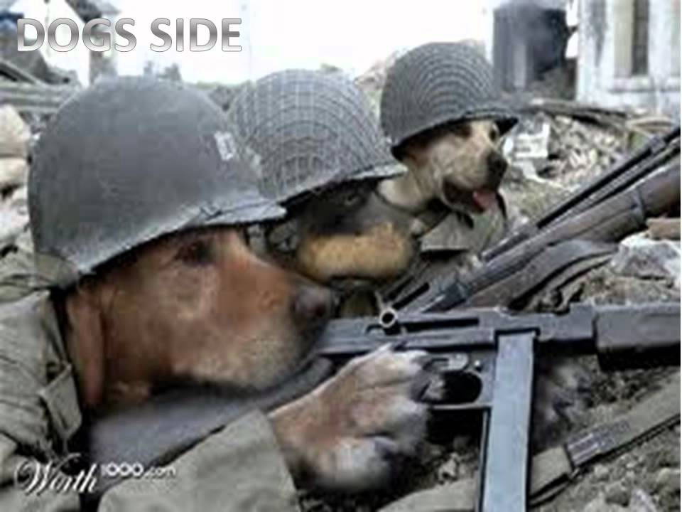 War of cats and dogs - YouTube