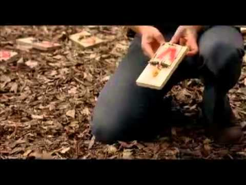 Hoot Full Movie (2006) video