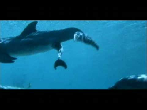 Dolphins' Sex and Birth - Liagen Video