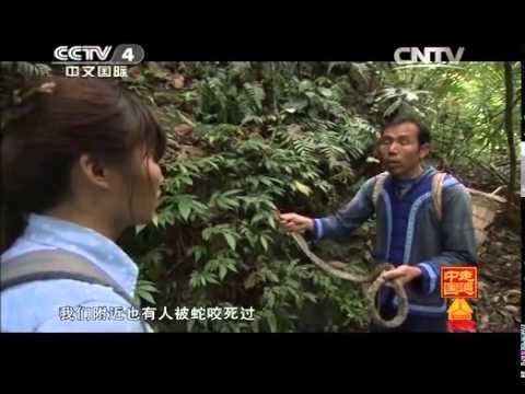 中國-走遍中國-20140403 深藏峽谷的靈丹妙藥