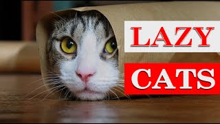 ULTIMATE Lazy cats compilation