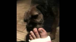 Dog licks my smelly potted foot