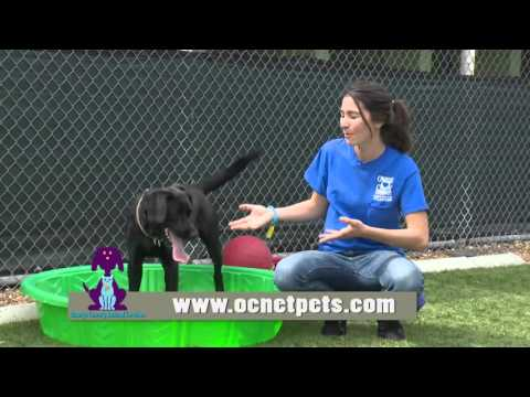 Orange County Animal Services - I Volunteer Because . . . Jenny