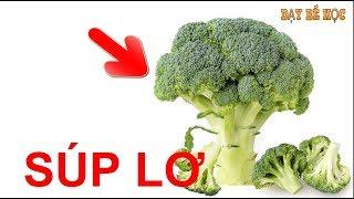 Dạy bé học rau củ | Bé nhận biết các loại rau củ quen thuộc nhanh nhất | Bài 186