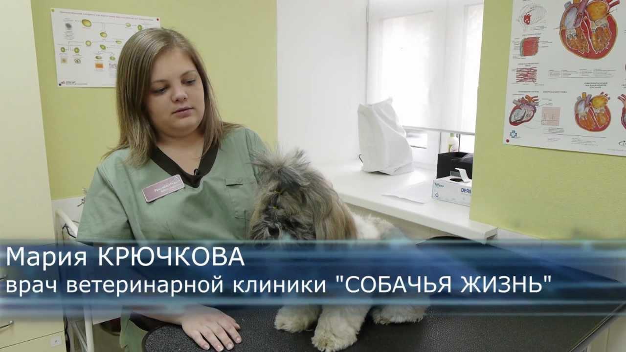 как выглядит собачья аллергия