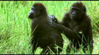 Singing and dancing animals FUNNY