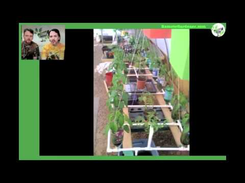 Growing Plants in Hydroponics Using Recycled Bottles from Seed to Harvest