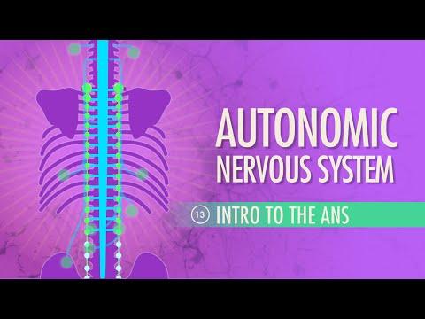 Autonomic Nervous System: Crash Course A&P #13