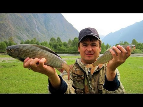 рыбалка в горном алтае в июне