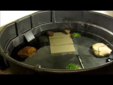 300 gallon Snapping turtle cage setup