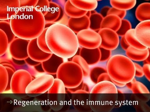 Regeneration and the immune system