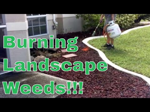 How To Kill / Rid Landscape Weeds with a Propane Torch