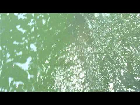 Dolphin follows boat off Marco Island FL Music Videos