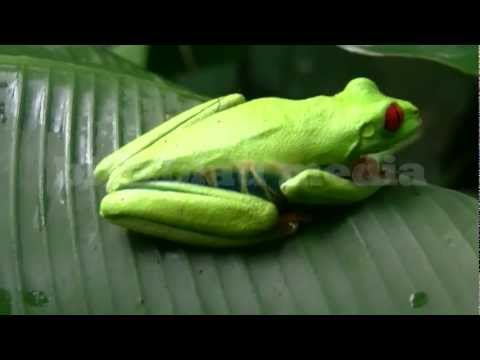 Stock Footage America Costa Rica Tortuguero Wildlife Nature Travel Tourism Rainforest Pura Vida