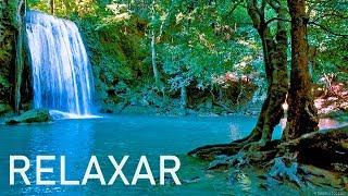 Música Relaxante 24/7 🔴 Sinta-se em Paz - Relaxar e Dormir 3