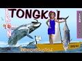 Download ERIN BCX - IKAN TONGKOL - Official Lyrics Video