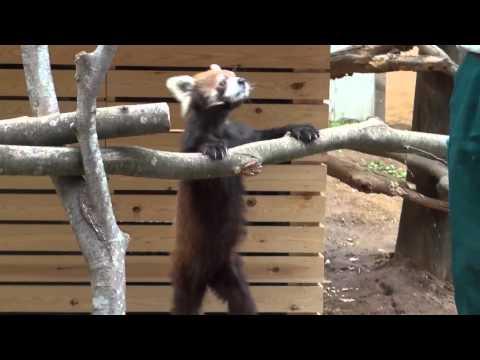 千葉市動物公園.mov