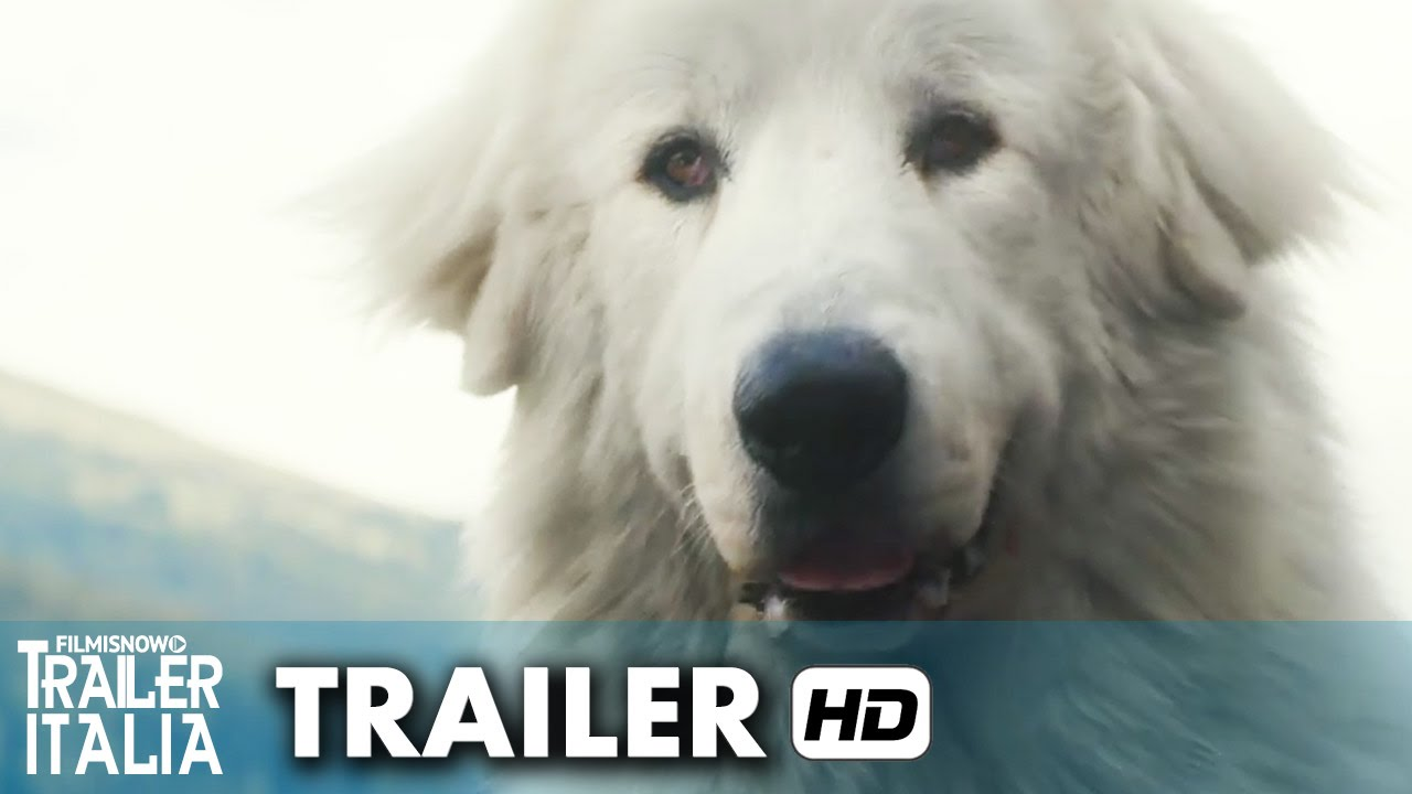 Belle & Sebastien - L'avventura Continua Trailer Italiano Ufficiale (2015) HD