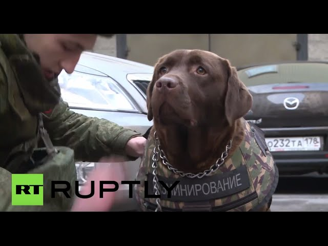 'Nord Body': Armored vest specially designed for dogs